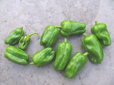 ピーマン10個収穫