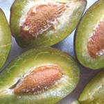 果物の採種・保存方法