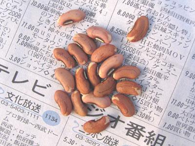 ナガササゲの種豆