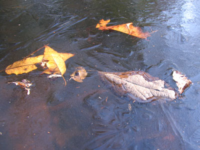 池のこおり