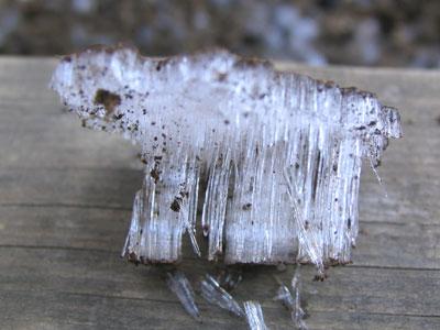 霜柱のかたまり