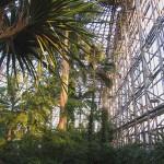 夢の島の熱帯植物園