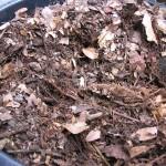 生ゴミ堆肥の発熱が治まる