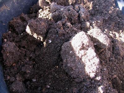土が大きな塊になっている
