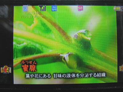 ダッシュ村(2009年4月26日放送)