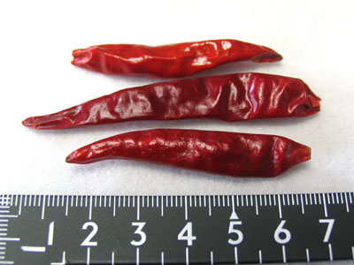 長さ5~7cmほど