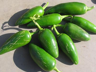 ハラペーニョの収穫