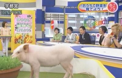 2010年9月1日放送 NHK「あさイチ」 おうちで野菜を育てよう!