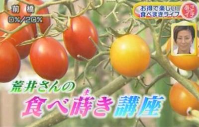 食べ蒔き講座―野菜編です