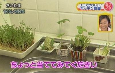 キッチンの片隅で、水栽培される野菜たち