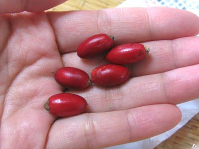 2センチ前後の、小さな赤い実です