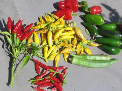 屋上菜園、秋の収穫