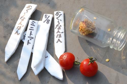 5月8日 唐辛子の神楽南蛮と一緒に種まき