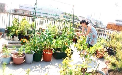 我が家の屋上菜園です