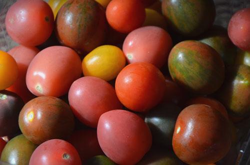 カラフルなミニトマト