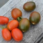 6月下旬、ミニトマト初収穫