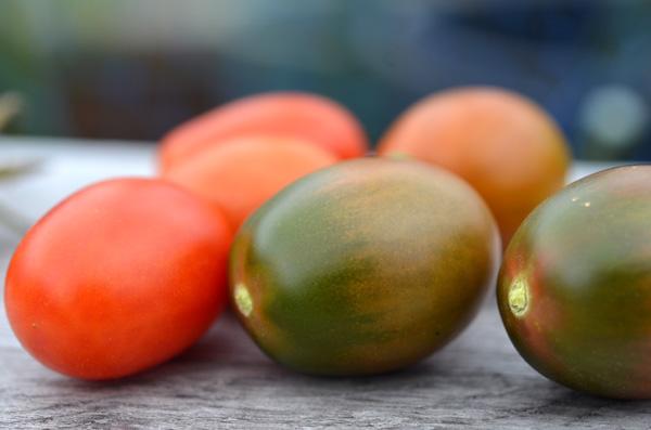 緑と赤、まだら模様のミニトマト